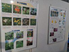釧路市立博物館パネル展「よ~く見てみよう!くしろの身近な植物」開催中